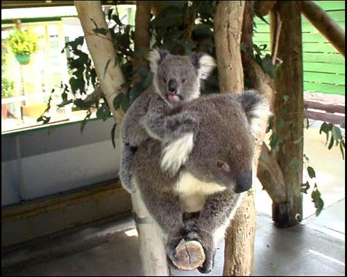 australie5.jpg