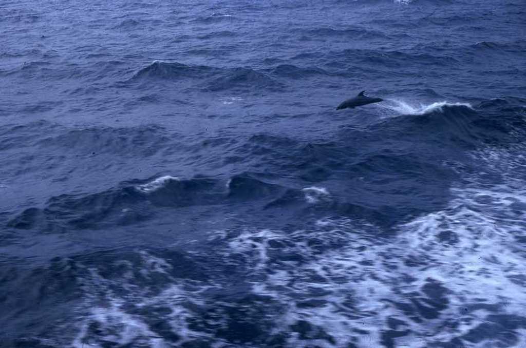 02dauphins.jpg