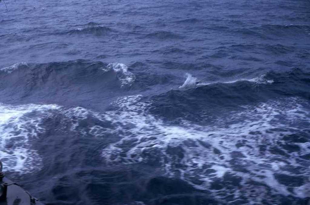 03dauphins.jpg