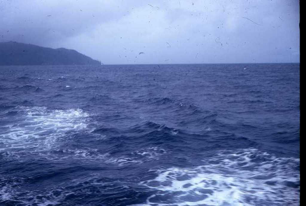 04dauphins.jpg
